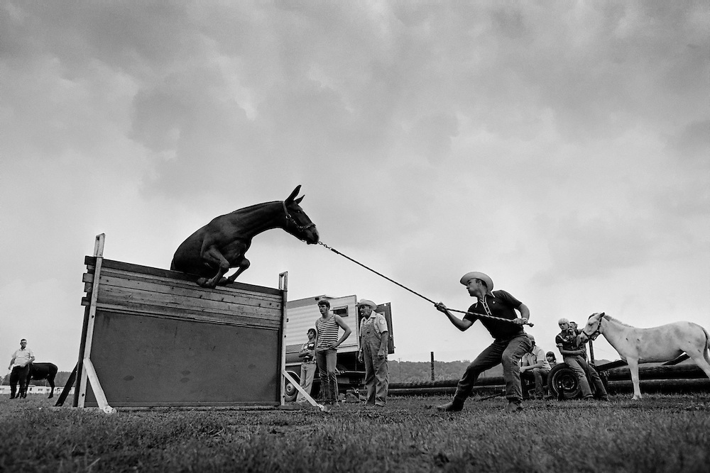 Mule jumping contest in Perry, Kansas