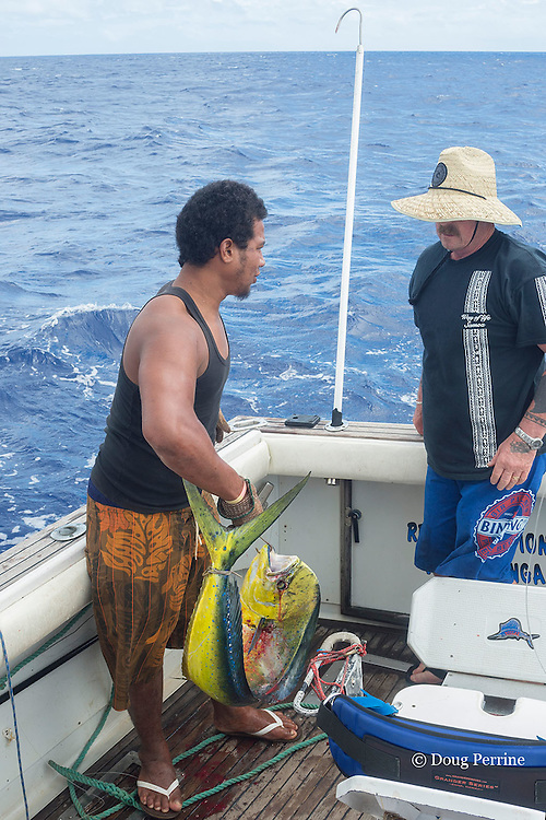 deck hand Patrick and angler Tony boating a mahi mahi, dorado, or dolphinfish, Coryphaena hippurus,  aboard Reel Addiction, based at Ika Lahi Fishing Lodge, Hunga Island, Vava'u, Kingdom of Tonga, South Pacific