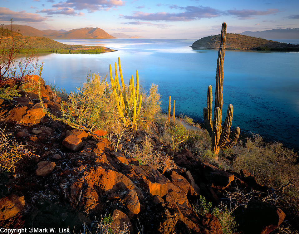 Cardon and Organ Pipe cactus cover a rocky hillside on the edge of the Sea Of Cortez, Baja California, Mexico