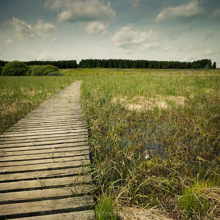 Wanderweg auf Holzsteg durch das Hochmoor des Hohen Venn, Longfaye, Belgien