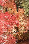 The beauty of Fall leaves - Oak Creek Canyon, AZ