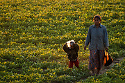 Working the farm fields, Monywa, Myanmar