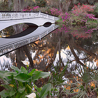 Calla lilies and Long Bridge, with Spanish moss and azaleas, Magnolia Plantation, near Charleston, South Carolina