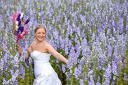 © Licensed to London News Pictures. 30_07_2015. Hurley Common, North Warwickshire, UK. When brides bought confetti petals made from delphiniums for their wedding day they started asking if they could pose in the fields where they had been grown. Now owner LILIAN (correct) SYKES welcomes brides to her farm on a regular basis to have pictures taken wearing their wedding dresses. Pictured, bride NICKI CLAYBROOK, amongst the colourful flowers grown for their petals and dried flower bouquets to have her picture taken. LILIAN purchased the derelict farm five years ago and had the idea of growing delphiniums to the surprise of local farmers. Last year LILIAN produced millions of confetti petals in eight different colours from her eight acres of flower fields. The petals and dried flowers found their way into major high street retailers as well as being sold online. Photo credit: Dave Warren/LNP