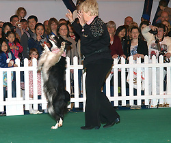 Donelda Guy takes Mega, 8, through her paces during a display at the London Pet Show in London's Earls Court, Sunday May 12 2013. Photo by: Max Nash / i-Images