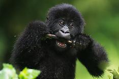 Rwanda #2 2012