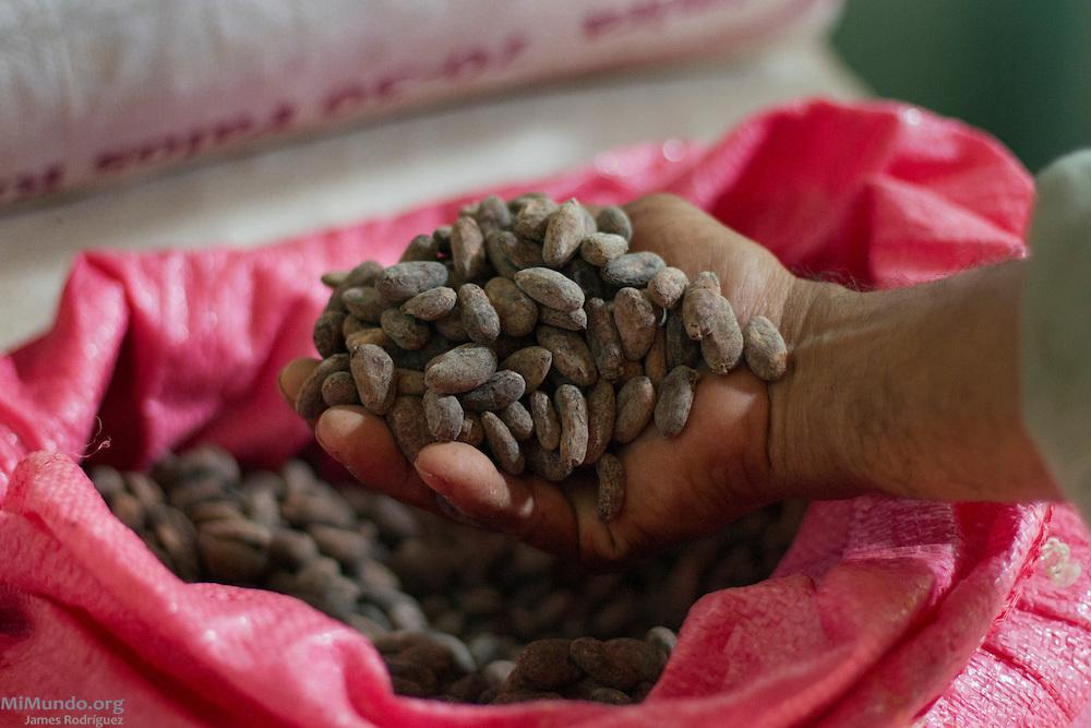 Mercedes Díaz Jaime, 63, local cacao producer and president of ASIHERCA, checks dried cacao beans. ASIHERCA (Asociación de Iniciativas y Hermanamientos de El Castillo), a local association of small-scale producers, exports cacao certified by the Fairtrade Labeling Organization (FLO). Buena Vista, El Castillo, Río San Juan, Nicaragua. January 27, 2014.