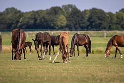 Het Trichelhof, merries, veulens<br /> het Trichelhof - Eindhout 2020<br /> © Hippo Foto - Dirk Caremans<br />  13/06/2020