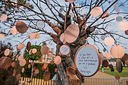 The wishing tree on The Facebook Beyond the Screen garden - Press preview day at The RHS Chelsea Flower Show.
