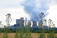 Europa, Deutschland, Nordrhein-Westfalen, Diesteln vor dem Braunkohlekraftwerk Weisweiler in Eschweiler-Weisweiler.<br />