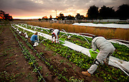 20110906 CSA Harvest