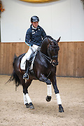 Severo Jurado Lopez - Lord Leatherdale<br /> Hengstenshow Van Olst Stables 2013<br /> © DigiShots