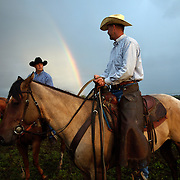 As a rainbow appears on the horizon, Michael Flattery waits for cattle to be herded into a corral where calves will be rounded up for bi-annual vaccinations, branding, the implant of growth stimulants, and in some cases, castration, at the Bar B ranch near Albia, Iowa.  After a morning rain, muddy conditions made the task more difficult.  Ranch owner Catherine Bay runs the operation with a herd of over 2,000 cattle.