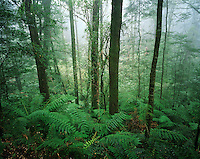Australia trees in rainforest