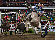 Jake Vold of Ponoka, Alberta rides a bronco named 'Game Changer' in the bareback competition in Falkland, BC (2012)