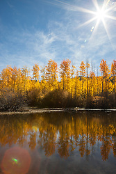 """""""Aspen Reflections 4"""" - Photograph of yellow aspen trees in the fall at a pond near Spooner Lake, Nevada."""