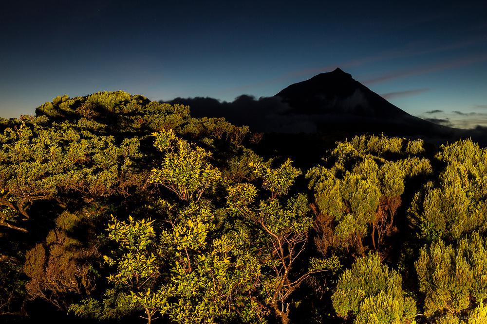 Endemic azorean vegetation against Pico mountain at dusk. Pico, Azores, Portugal