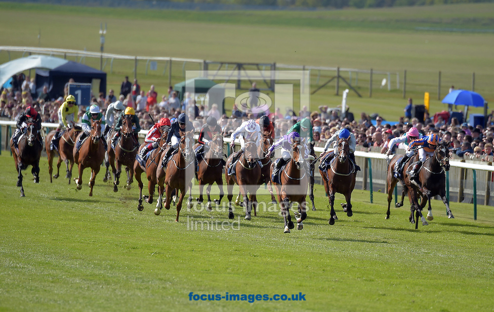 A preview of this weekend's favourites in UK racing.<br /> Picture by Martin Lynch/Focus Images Ltd 07501333150<br /> 13/10/2016<br /> <br /> <br /> Original Caption:<br /> Leading in centre is Minding with R Moore 1st in 1000 Guineas at Newmarket 1-5-16.