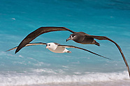 Hawaii seabird photos