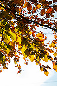 Autumnal Colours in Bourne November 8th 2019
