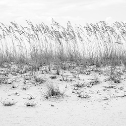 Pensacola Beach Florida beach grass beachscape black and white photo. Pensacola Beach is a coastal city in the Emerald Coast area of the Southeastern United States. Panoramic photo ratio is 1:3. Copyright ⓒ 2018 Paul Velgos with All Rights Reserved.