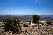 Joshua Tree National Park Scenic View