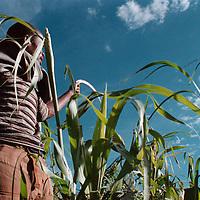 lesotho high value crop