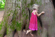 A girl hugs an old growth Redcedar tree