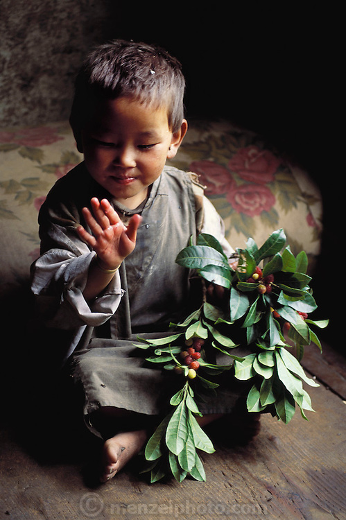 Three-year-old Chato Geltshin holds a branch full of berries brought by Uncle Kinley Dorji after a firewood-cutting expedition outside their hillside village of Shingkhey, Bhutan. Published in Material World: A Global Family Portrait, page 76.