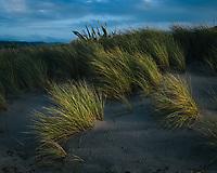 Last rays of light hitting grass on the beach. South Island, New Zealand.