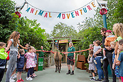 UNITED KINGDOM, London: 30 July 2019<br /> Ande the Lama chews through the rope of the Animal Adventure Playpark at the opening of the new area at London Zoo this morning. The new and exciting nature-inspired adventure-play destination officially opens to the public tomorrow on July 31st 2019.<br /> Credit: Rick Findler / Story Picture Agency