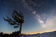 Desolation wilderness backcountry winter trip. Ancient pine tree at Aloha Lake with Pyramid peak and the Milky Way along with the trio of Mars, Saturn and Antares over the peak.