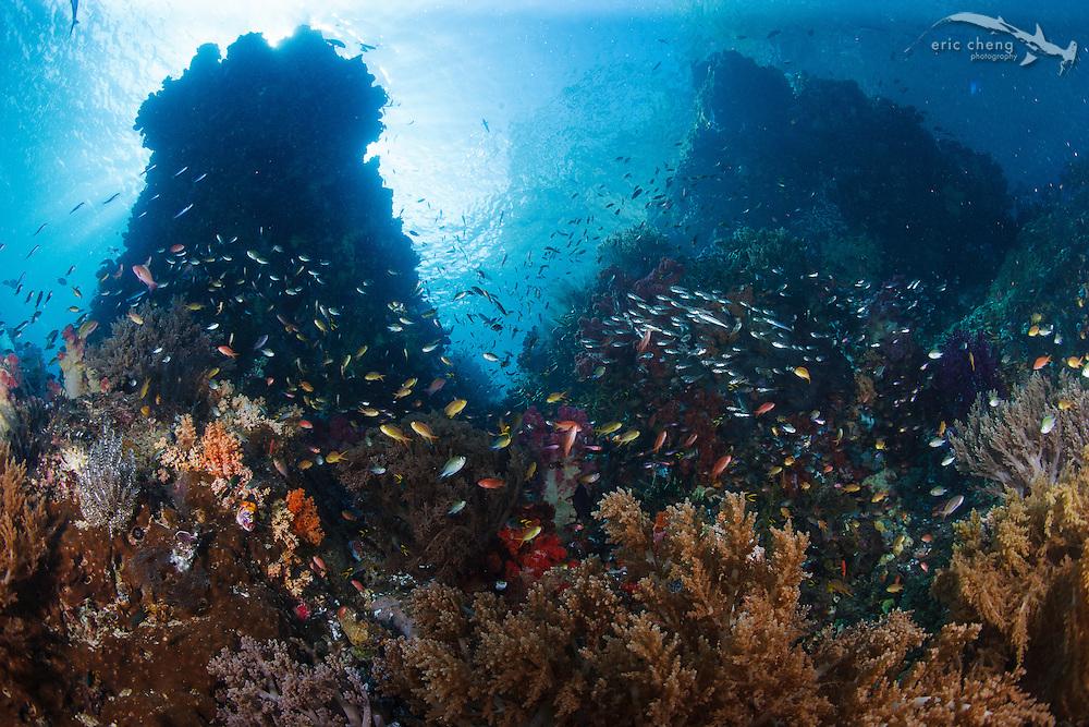 The lush reef at Little Komodo, Kaimana, Bird's Head Peninsula, Indonesia