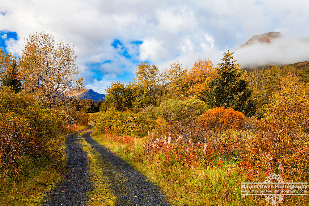 Fall colors and road in Kodiak, Alaska