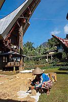Indonesie. Sulawesi (Celebes). Pays Toraja, Tana Toraja. Maison toraja (tongkonan) au village de Sangpiakpadang.// Indonesia. Sulawesi (Celebes Island). Tana Toraja. Traditional house (tongkoman) at Sangpiakpadang village.