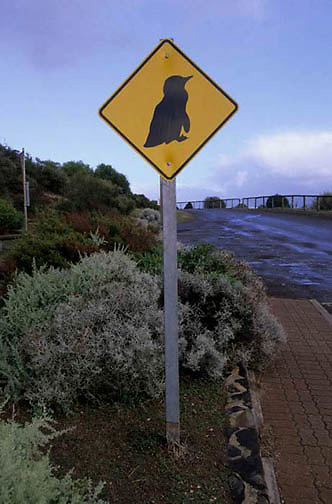 Australia, Little Fairy Penguin crossing road sign. Kangaroo Island.