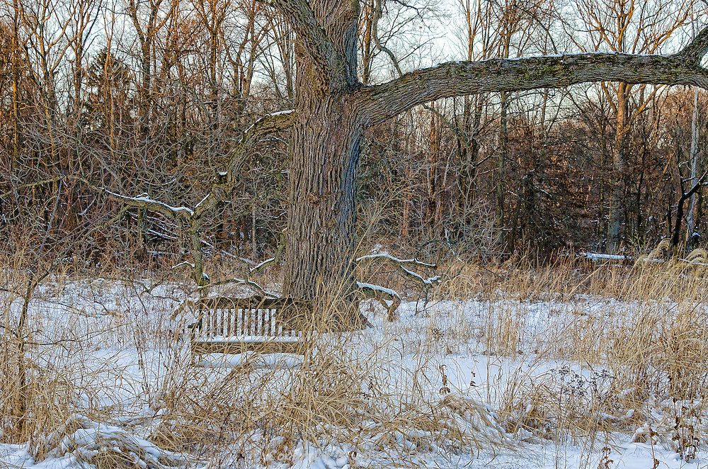 A little off the beaten path at Duke Farms in Hillsborough, NJ, I came across this bench half hidden behind the dead grass.  It is late in the day, so the last hints of golden light are showing across the top of the image in contrast to the more somber setting in the snow.