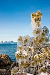 """Icy Tree at Lake Tahoe"" - This ice and icicle covered tree was photographed in the early morning at Sand Harbor, Lake Tahoe."