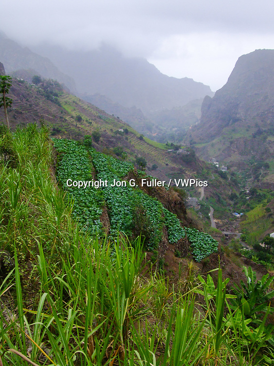 A terraced vegetable garden on the steep hillside in the Valley of Paul, Santo Antao, Republic of Cabo Verde, Africa.