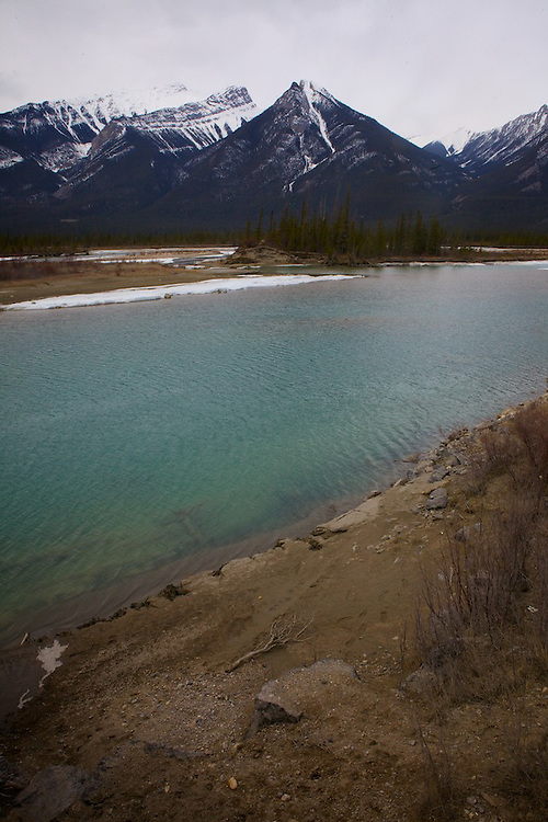 In April, Spring melts snow and ice in Jasper National Park Alberta. Wildlife are particularly active as lichen becomes more available for browsing, new borns begin to explore and tourism is still relatively light.