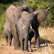 A family of elephants at Tarangire National Park in northern Tanzania not far from Ngorongoro Crater and the Serengeti.
