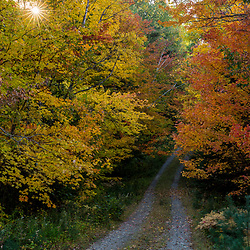 A woods road in Maine's Northern Forest. Fall.