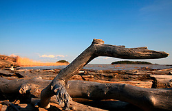 CANADA ALBERTA FORT CHIPEWYAN 11MAY07 - Driftwood on the shore of Lake Athabasca at Fort Chipewyan, northern Alberta, Canada...jre/Photo by Jiri Rezac / WWF-UK..© Jiri Rezac 2007..Contact: +44 (0) 7050 110 417.Mobile: +44 (0) 7801 337 683.Office: +44 (0) 20 8968 9635..Email: jiri@jirirezac.com.Web: www.jirirezac.com..© All images Jiri Rezac 2007 - All rights reserved.