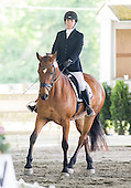 Horse 276
