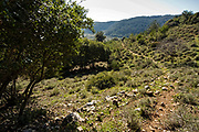 lush green landscape in the Carmel Mountain range, Israel