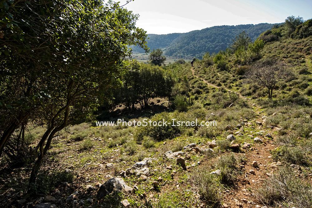 lush green landscape in the Carmel Mountain range, Israel