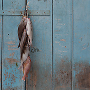 A days catch of fish hang from a door in Old Havana, Cuba.