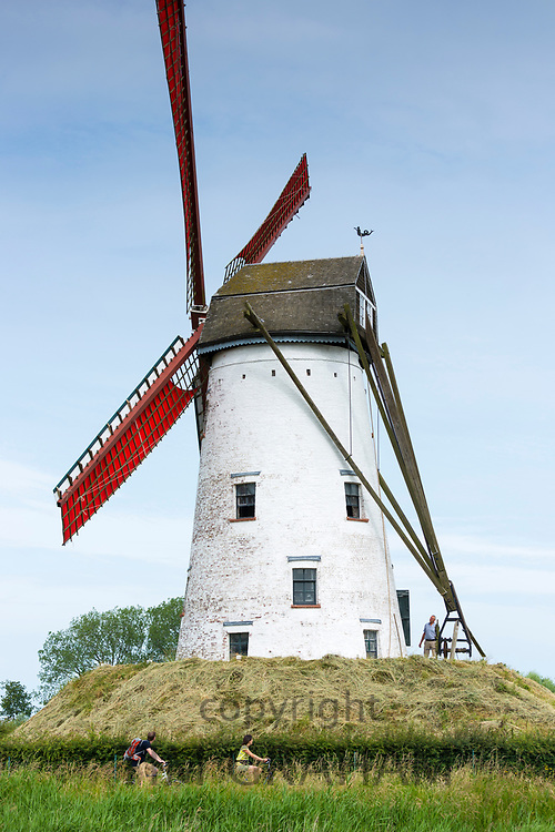 Adult cyclists riding bicycles past traditional Schellemolen windmill at Damme, West Flanders, Belgium