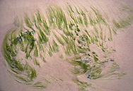"Seas grass on ""pink sands"" beach, Bonaire"