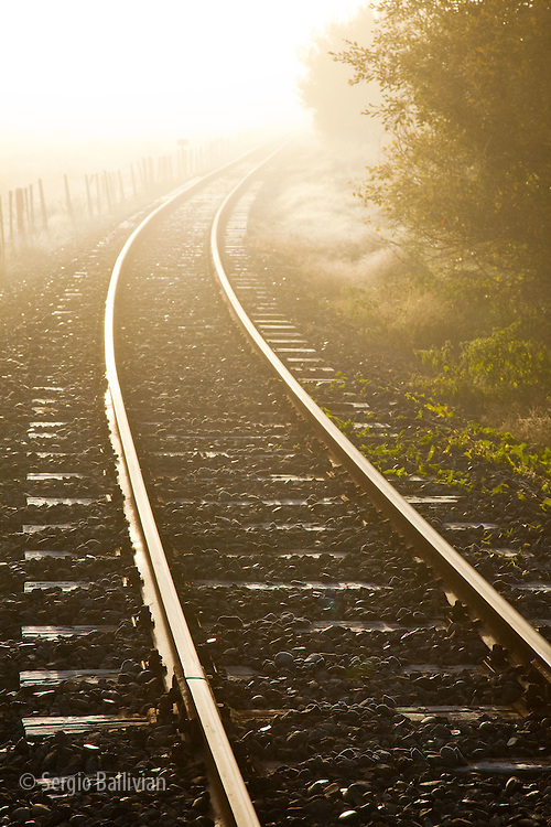 A light fog and frost coat the plants and railroad tracks in early autumn on The Forgotten world Road in New Zealand's central region of the North Island.